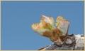 prosecco-primavera_9112_il-tramonto