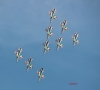 frecce tricolori_ad smets_2498