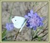 bella-italia_foto-ad-smets_08719