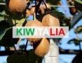 kiwi_kiwitalia_il tramonto