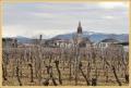luca-fedele_7631_il-tramonto-wines