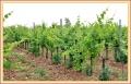 gelisi_5185_il-tramonto-wines