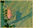 insect_8662_il-tramonto
