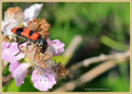 insect_8915_il-tramonto