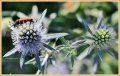 insect_ad-smets_8883