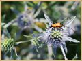 insect_ad-smets_8885