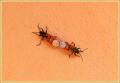 kontje-insecten_0227_il-tramonto