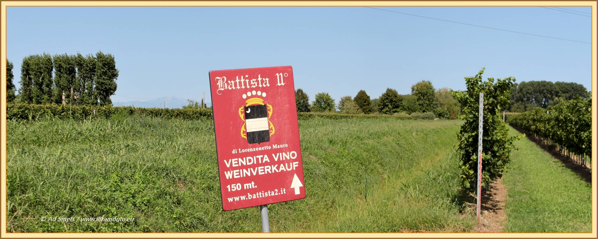 vendemmia Battista II