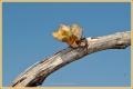 primavera-prosecco_9115_il-tramonto
