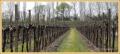 tranende-wijnvelden_9123_il-tramonto