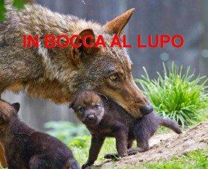 iltramonto_wolf